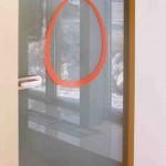 Стеклянная дверь с матовым покрытием для салона МТС